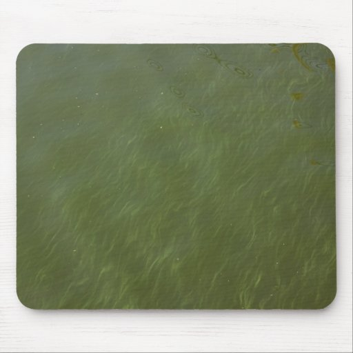 Water, near shore. mouse pads
