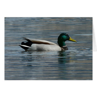 Water off a ducks back greeting cards
