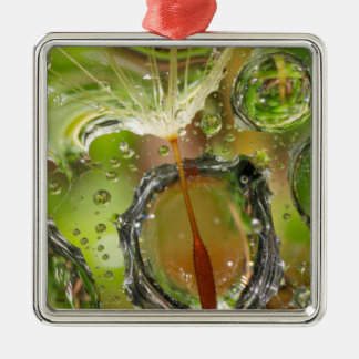 Water on dandelion seed, CA Christmas Ornament