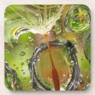 Water on dandelion seed, CA Drink Coasters
