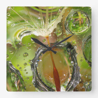 Water on dandelion seed, CA Square Wall Clock