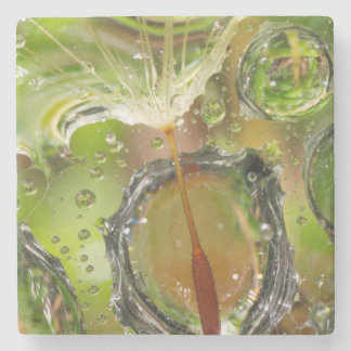 Water on dandelion seed, CA Stone Beverage Coaster