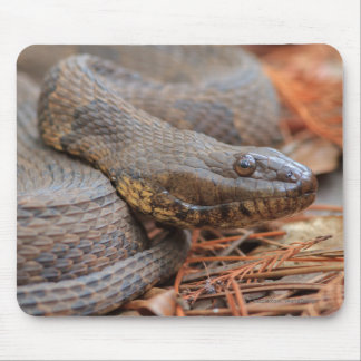 Water Snake Mouse Pad