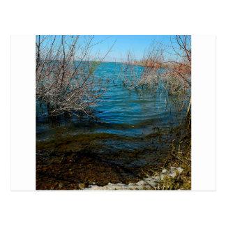 Water Swamp Lake City Postcard