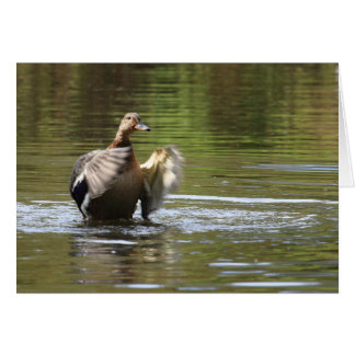 Water Walking Mallard Card