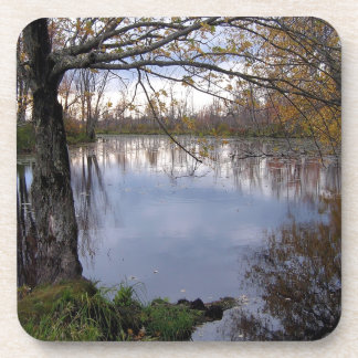 Water Wetland Woods Coaster