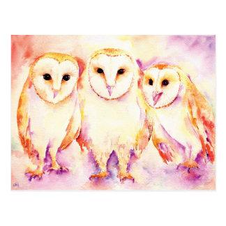 Watercolor 3 barn owls post Card Postcard