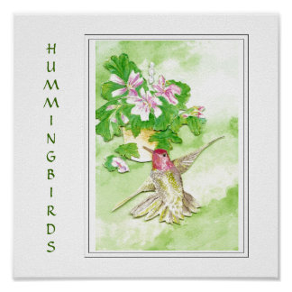 Watercolor  Anna's Hummingbird -Bird  Print