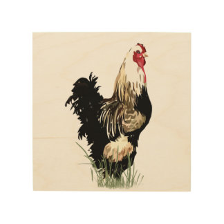 Watercolor Black White Chicken Rooster Art
