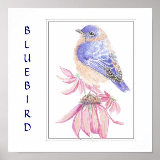 Watercolor Bluebird, Bird Collection Poster