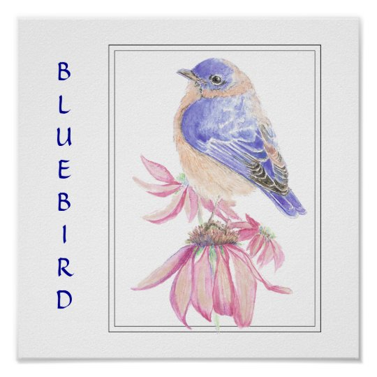Watercolor Bluebird, Bird Collection Poster