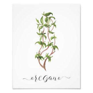 Watercolor Botanical Herb Print Oregano Art Photo