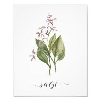 Watercolor Botanical Herb Print Sage