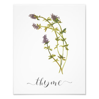 Watercolor Botanical Herb Print Thyme