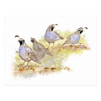 Watercolor California Quail Bird Nature Art Postcard