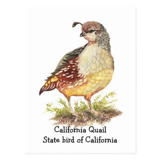 Watercolor California Quail State bird Post Card