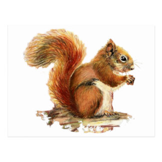Watercolor Cute Red Squirrel Animal Nature Postcard