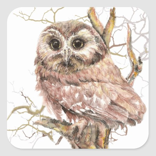 Watercolor Cute Saw Whet Owl, Bird Stickers