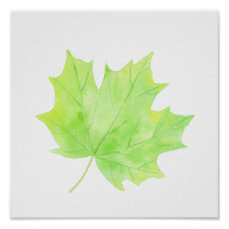 Watercolor Green Maple Leaf Poster