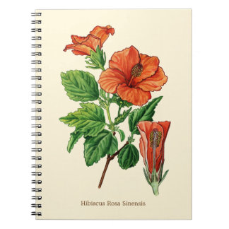 Watercolor Hibiscus Notebooks