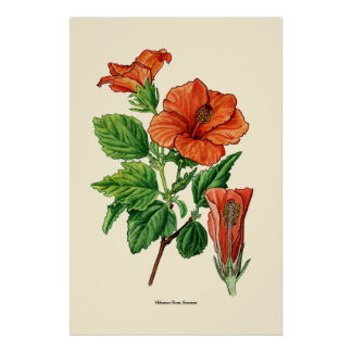 Watercolor Hibiscus Poster