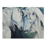Watercolor Horse Postcard