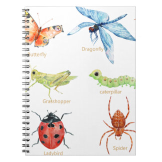 Watercolor insect illustration notebooks
