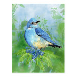 Watercolor Mountain  Bluebird Bird nature Art Postcards