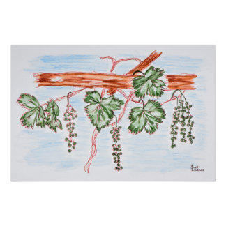 Watercolor of Vines with Grapes | France Poster