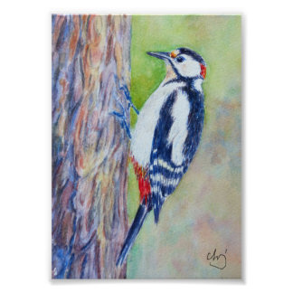 Watercolor Painting great spotted woodpecker bird Poster
