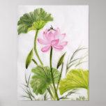 Watercolor Painting Of Lotus Flower Poster