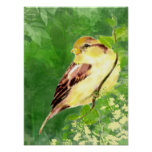 Watercolor Painting of Sparrow Bird in Tree Poster