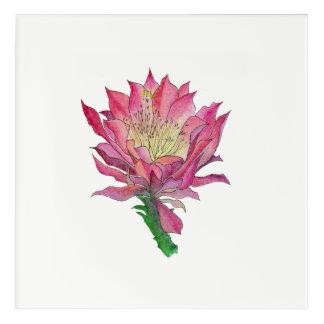 Watercolor Pink Cactus Flower Print Acrylic Print