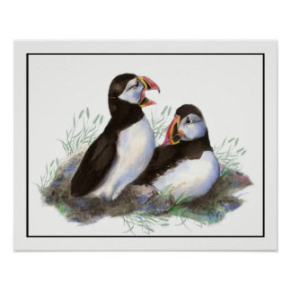 Watercolor Puffin Ocean Bird art Poster
