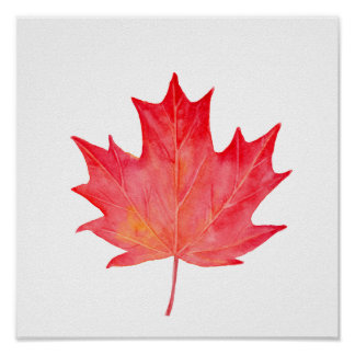 Watercolor Red Maple Leaf Poster