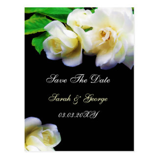 watercolor romantic white rose save the date postcard