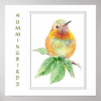 Watercolor Rufous Hummingbird -  Bird Collection Poster