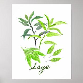 Watercolor Sage Illustration Poster