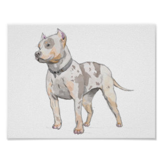 Watercolor Sketch Pit Bull Dog Poster