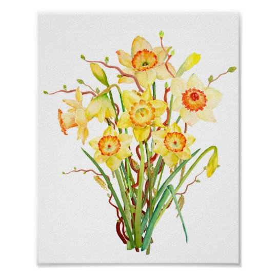 Watercolor Spring Flower Daffodil Poster Zazzle