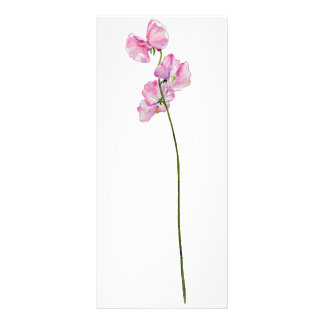 Watercolor Sweet Pea Bookmark Rock Card