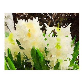 Watercolor White Hyacinths Postcard