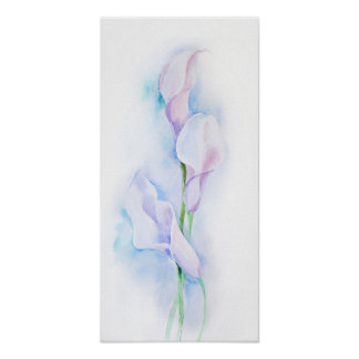 watercolor with 3 callas poster