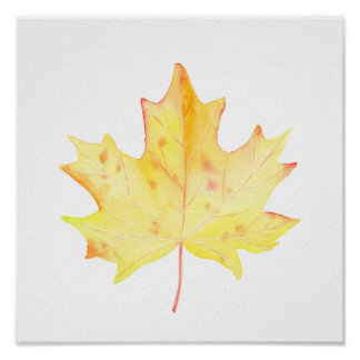Watercolor Yellow Maple Leaf Poster