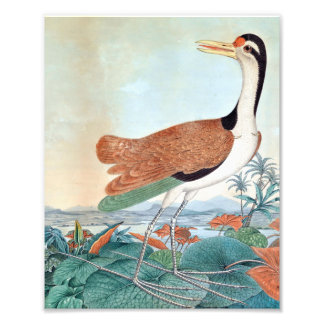 Watercolour of Jacana Bird (Aloys Zotl) Art Photo