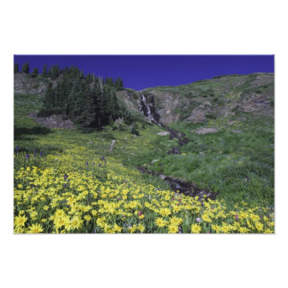 Waterfall and wildflowers in alpine meadow, 2 photo print