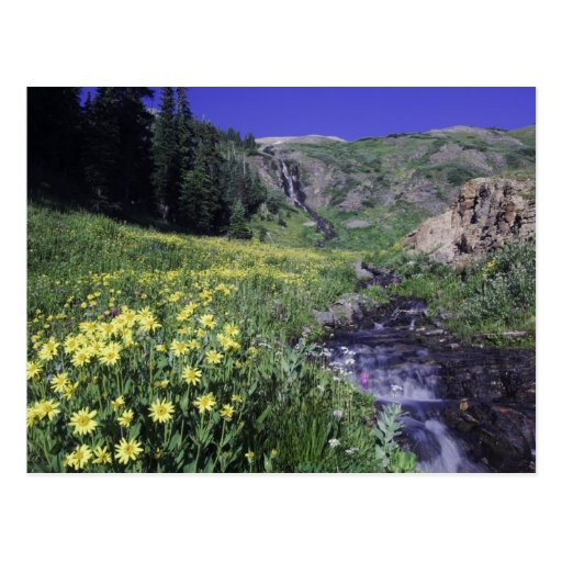 Waterfall and wildflowers in alpine meadow, 2 post cards