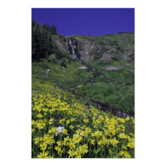 Waterfall and wildflowers in alpine meadow, poster
