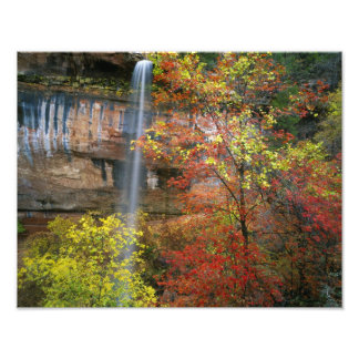 Waterfall, bigtooth maple Acer Photo Print