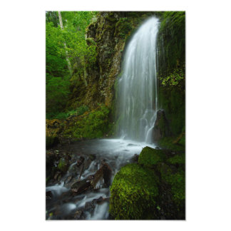 Waterfall in a Forest of the Pacific Northwest Art Photo